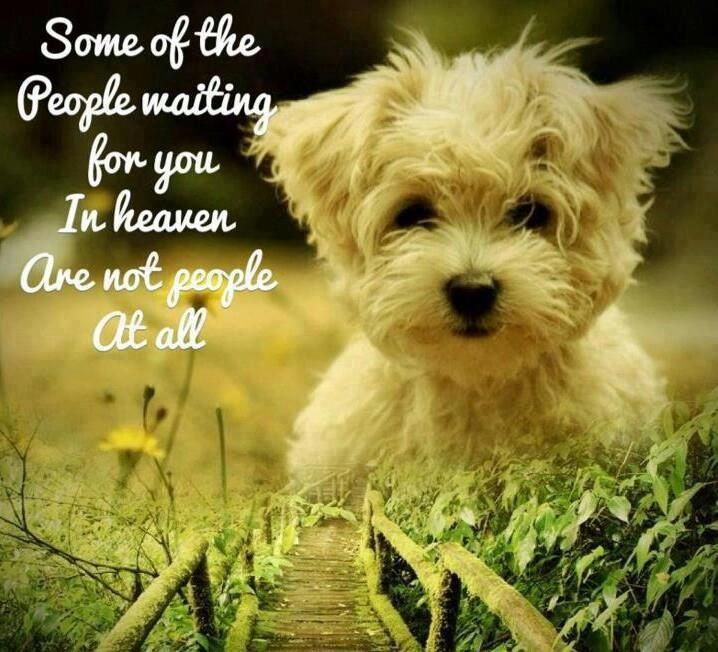 103 Best Dogs   Forever Friends   #1 Images On Pinterest | Dogs, Friends  And Sweet Dog Quotes