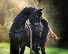 196 Best Beautiful Horse Pictures Images On Pinterest