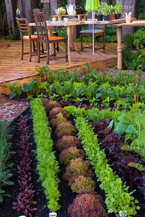 My Dream Garden: Veggie Landscaping   Beautiful Vegetable Garden U0026 Backyard  Deck And Patio Furniture, Rows Of Colored Lettuces, Chard, Carrots, ...