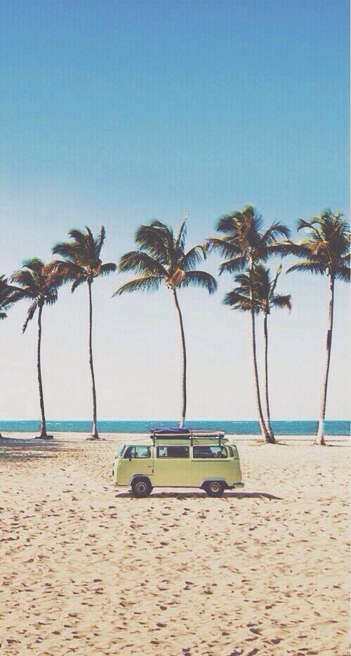 Cali Beach Palm Trees