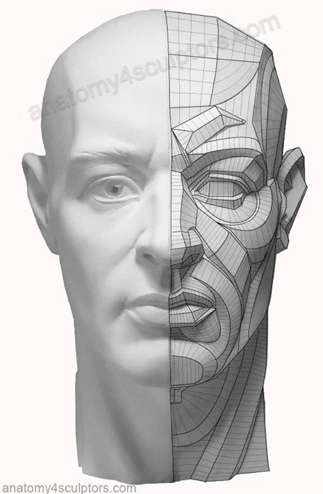 357 Best Facial Anatomy For Artists Images On Pinterest Faces