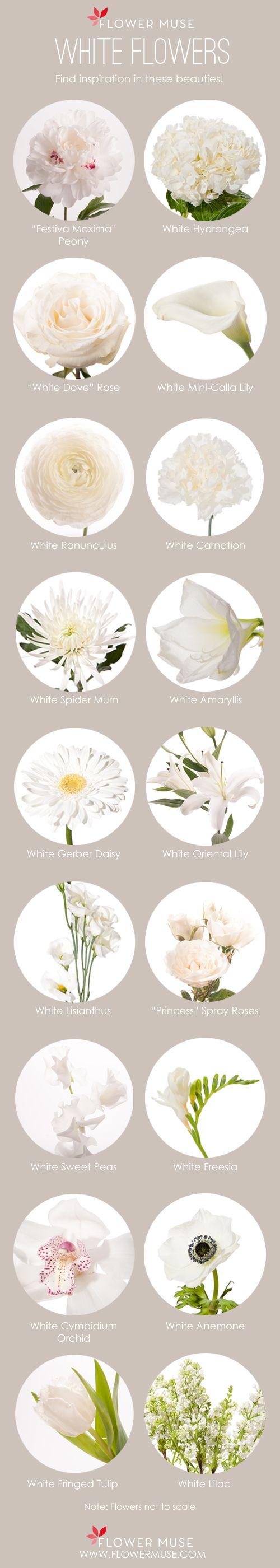111 Best FLOWERS White Ivory Cream Images On Pinterest