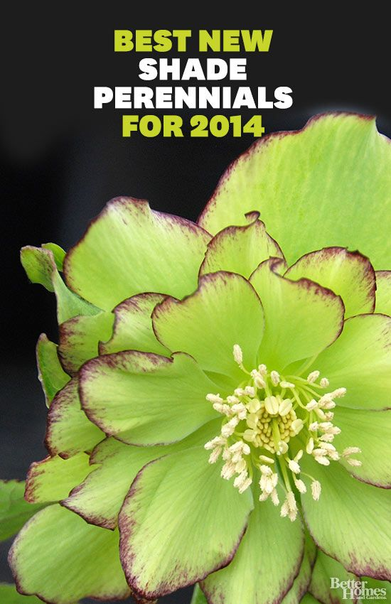 110 best shade loving plants images on pinterest flowers garden the best new shade perennials for 2014 mightylinksfo
