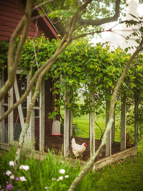 adorable better homes garden store. 403 best Cute Coops images on Pinterest  Chicken coops Poultry house and