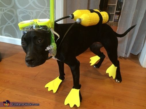 102 best dog halloween costumes images on pinterest costumes scuba dog halloween costume contest at costume works clever costumesdiy solutioingenieria Image collections